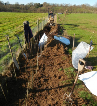gallery/120111 hedge planting 1