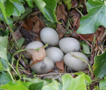 gallery/120502 nest eggs
