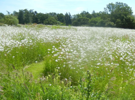 gallery/140606 meadow white