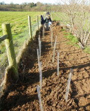 gallery/120111 hedge planting 2